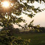 2010-06-13-Landschaft-Diedorf-(14)